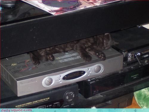kitten naps Smokey - 3130883328