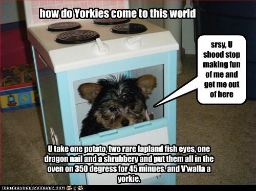 how do Yorkies come to this world U take one potato, two rare lapland fish eyes, one dragon nail and a shrubbery and put them all in the oven on 350 degress for 45 minues. and V'walla a yorkie. srsy, U shood stop making fun of me and get me out of here