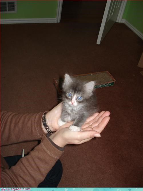 blender cute kitten - 3131875328