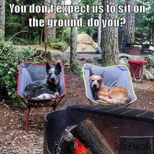 memes and comics of animals in camping