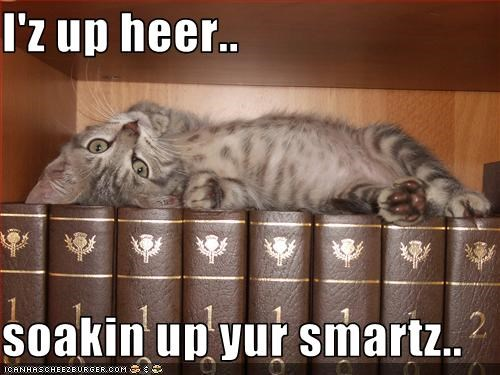 books cute kitten osmosis smart - 3132186880