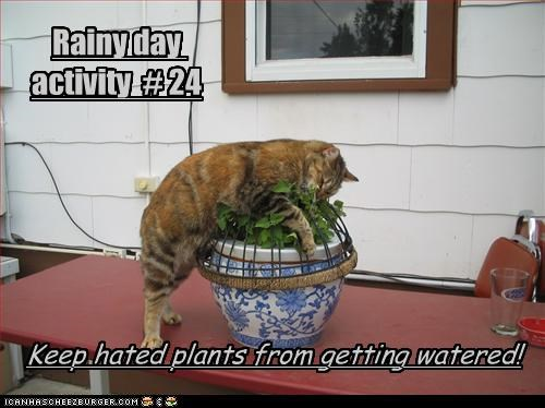 Rainy Day Activity 24 Cheezburger Funny Memes Funny Pictures