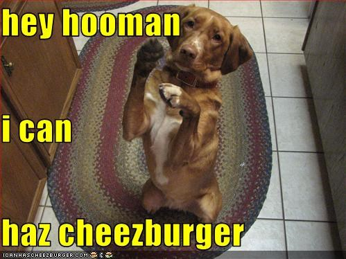 Cheezburger Image 3132755712