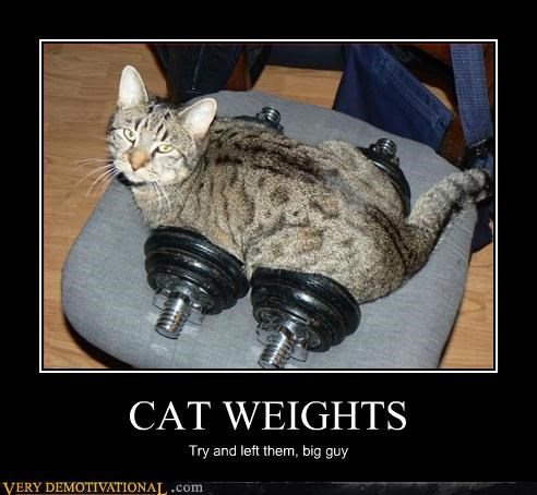 CAT WEIGHTS Try and left them, big guy
