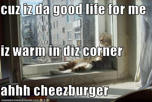 Cheezburger Image 3132854528