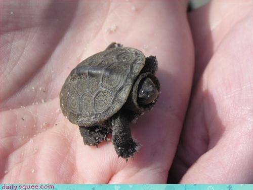 cute so tiny turtle - 3133889024