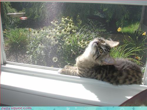 ceiling cat,kitten,lolcat