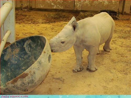 bukkit lolrus rhino - 3135313920