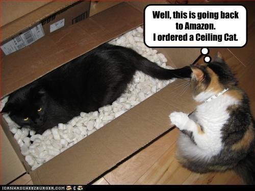 amazon basement cat box ceiling cat do not want - 3136960512