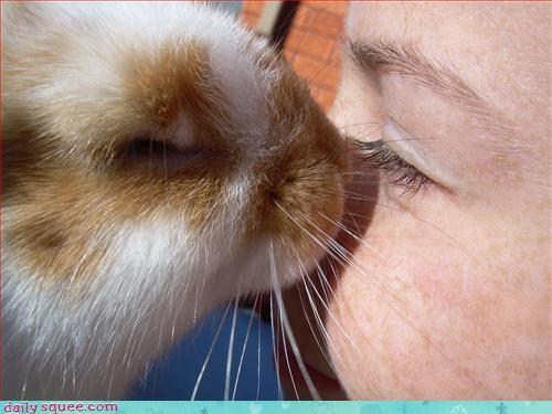 bunny cute KISS - 3138112512