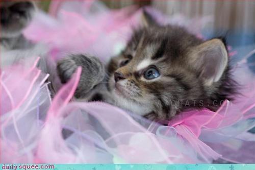 ballerina costume kitten - 3138777344