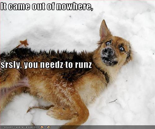 attack german shepherd run scared snow - 3138932736