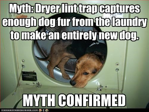 MYTH CONFIRMED Myth: Dryer lint trap captures enough dog fur from the laundry to make an entirely new dog.
