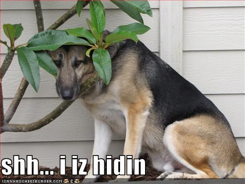 FAIL,german shepherd,hiding,plant