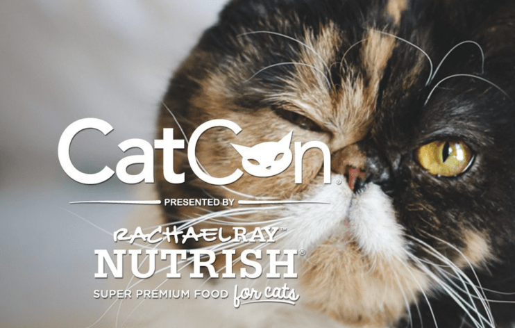 Highlights of Catcon convention 2017