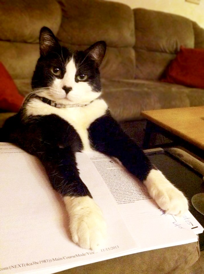 a funny picture of a cat putting its arms on a bunch of important papers - cover for a list of cats that need attentoin