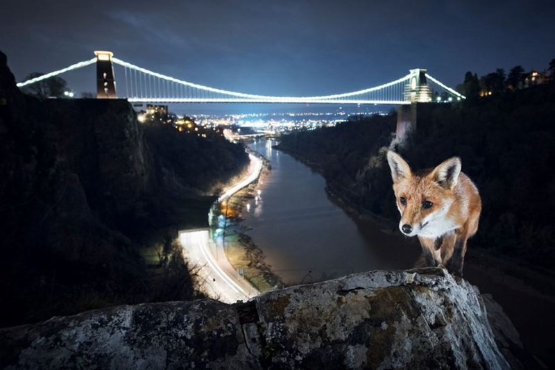 photos of wildlife animals in Europe