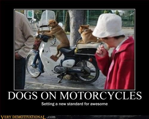 Dogs On Motorcycles Giligan Hat Pure Awesome - 3142990592