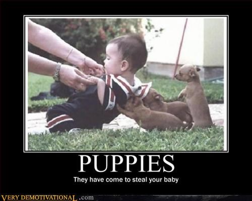 animals hilarious puppies stealing babies Terrifying - 3142991360