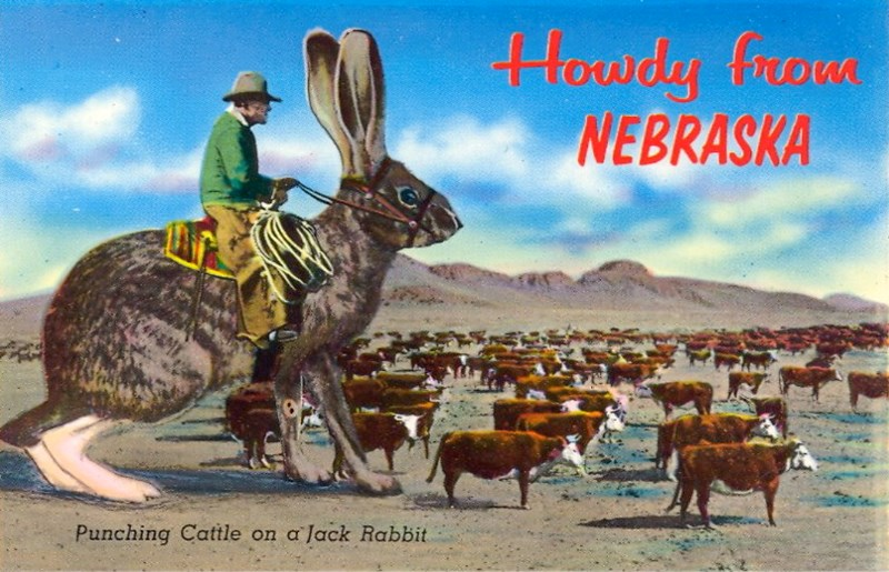 bad vintage postcards with animals