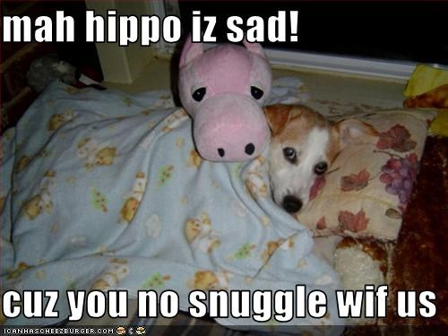 bed,hippo,jack russel terrier,Sad,snuggle,stuffed animal