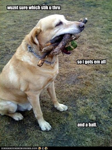 ball,fetch,golden retriever,stick,throw