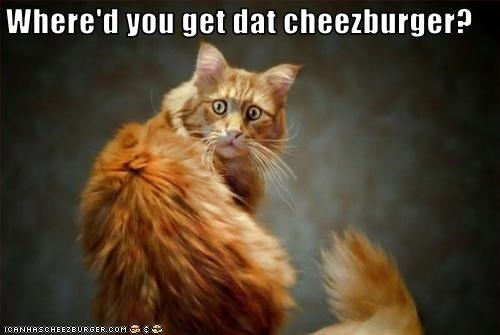 Cheezburger Image 3144860416
