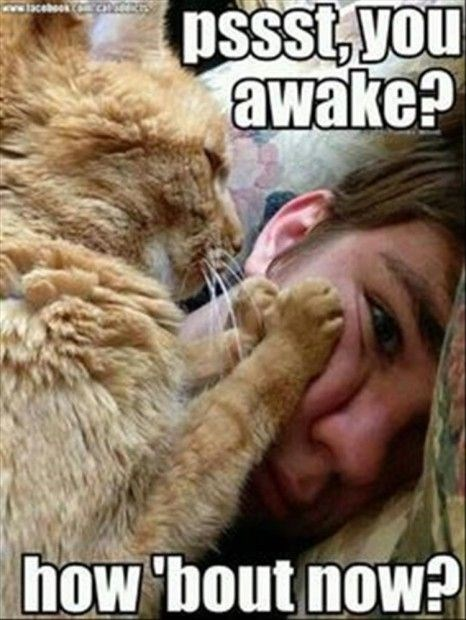 a funny cover photo of a meme of a guy getting woken up by his annoying orange cat -cover for alarm cats