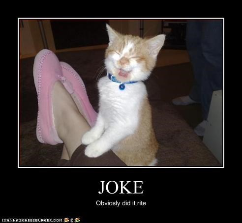 funny joke kitten laughing - 3145742336