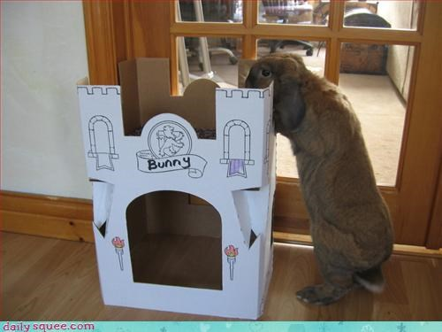 castle rabbit - 3146374144