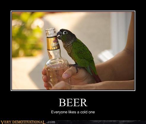 drinking booze parrots - 3146970880