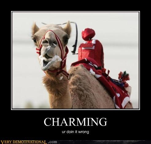 camel,doing it wrong,charming