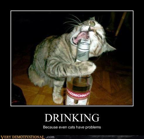 cat drinking booze - 3148771328