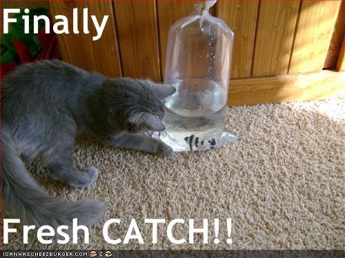 Finally  Fresh CATCH!!