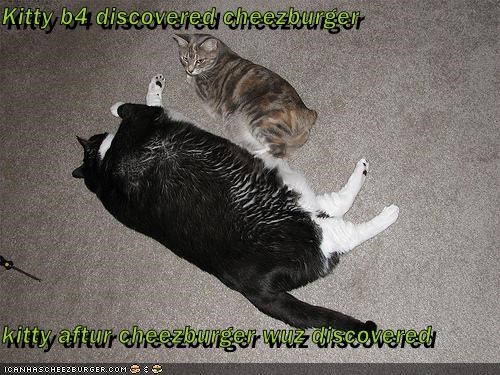 Kitty b4 discovered cheezburger  kitty aftur cheezburger wuz discovered