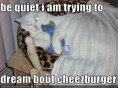 Cheezburger Image 3150717184