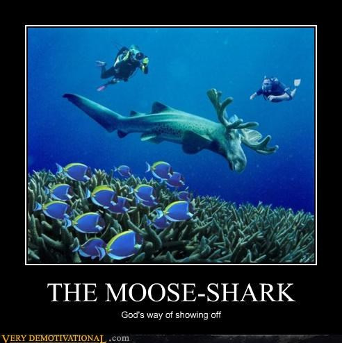 THE MOOSE-SHARK God's way of showing off