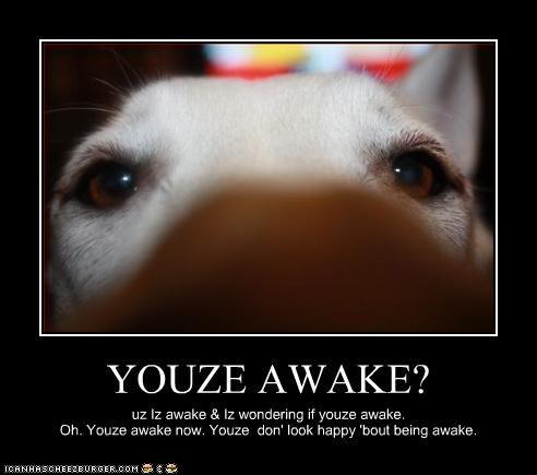 YOUZE AWAKE? uz Iz awake & Iz wondering if youze awake. Oh. Youze awake now. Youze don' look happy 'bout being awake.