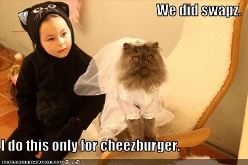 Cheezburger Image 3153270784