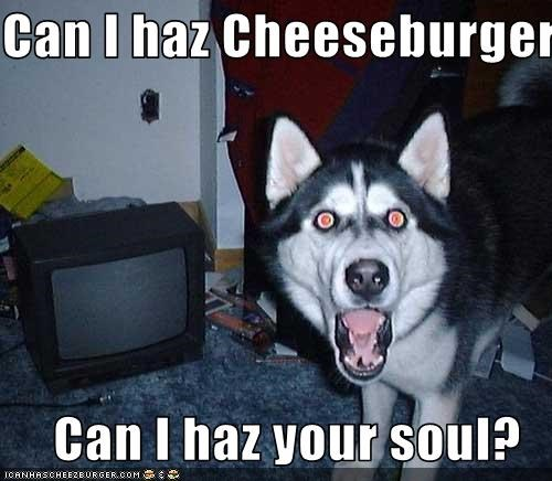 Cheezburger Image 3154641408