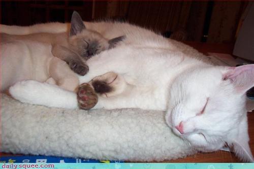 kitten mom siblings - 3154951680