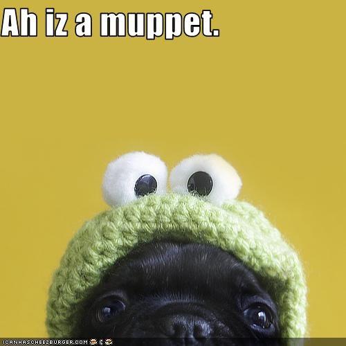 hat muppet pug - 3155788800