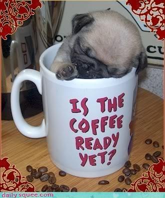 nap pug puppy - 3157017856