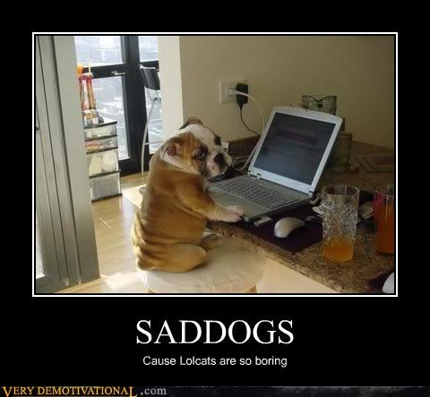 Sad lolcats bulldog dogs - 3157614336