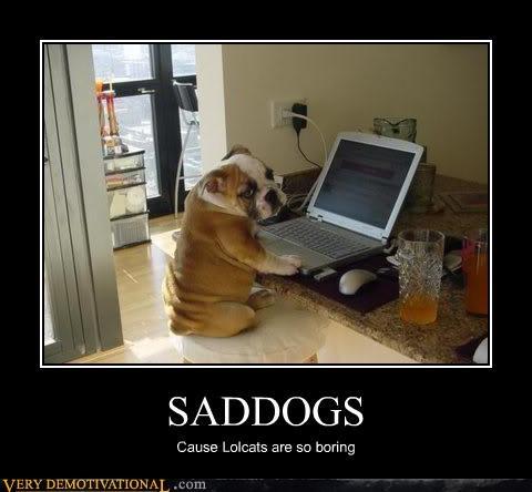 Sad lolcats bulldog dogs - 3157614336