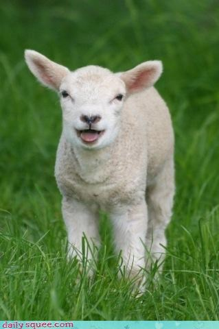 face lamb talking - 3158082816