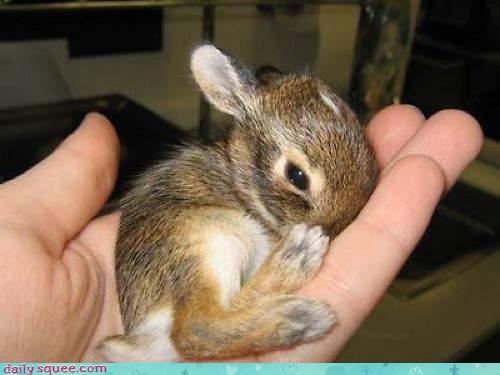 bunny cute tiny - 3158099968