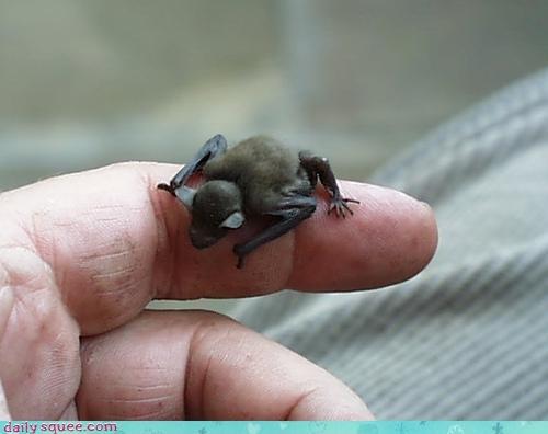 baby bat tiny - 3158124800