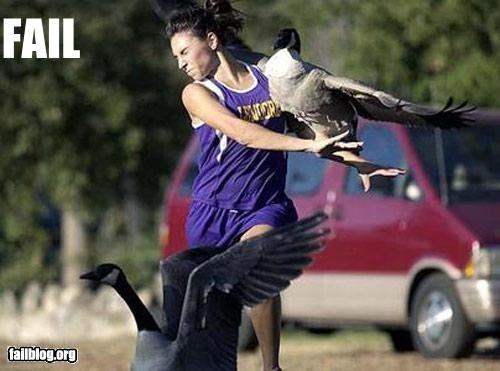animals,collision,crash,geese,g rated,runners,running