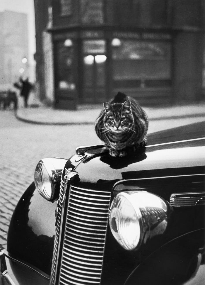 photos of cats in London in the 50's